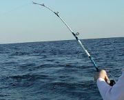 Inshore & Near Shore Trips - Backin' Up Sportfishing Charters