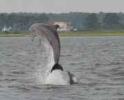 Morning Dolphin Watch - Captain Johnny's Dolphin Tours