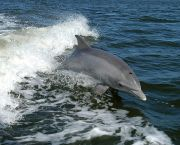 Afternoon Dolphin Watch - Captain Johnny's Dolphin Tours