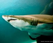 Shark Bites - North Carolina Aquarium on Roanoke Island