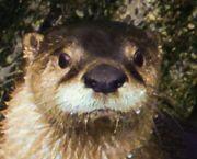 Happy Otter Hour - North Carolina Aquarium on Roanoke Island