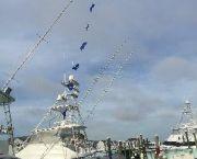 Tournament Fishing - A-Salt Weapon Charters