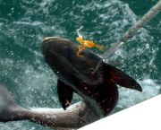 Full Day Inshore and Near-Shore Trips - Backin' Up Sportfishing Charters