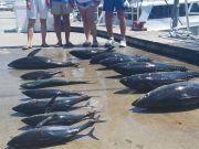 Phideaux Fishing, JULY TUNA, NO shark