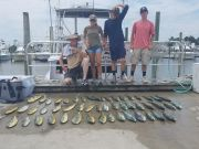 Phideaux Fishing, DOLPHIN