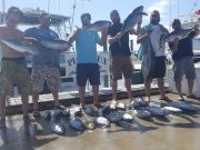 Phideaux Fishing, September Tuna