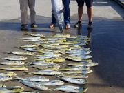 Phideaux Fishing, 100 pound wahoo