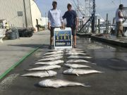 Carolina Girl Sportfishing Charters Outer Banks, This Tile fish season is one for the record books