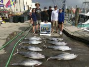 Carolina Girl Sportfishing Charters Outer Banks, Still Great Tuna Action