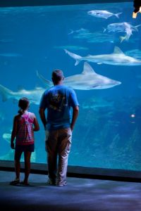 North Carolina Aquarium on Roanoke Island photo