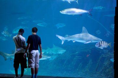North Carolina Aquarium on Roanoke Island photo