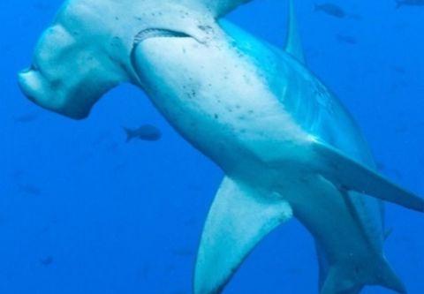 Carolina Girl Sportfishing Charters Outer Banks, Giant Shark Trip