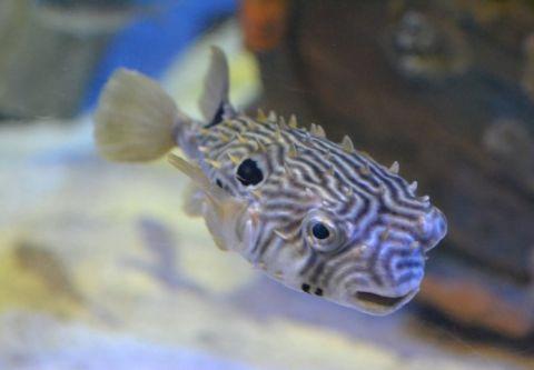 "North Carolina Aquarium on Roanoke Island, Gyotaku - ""Fish Printing"""