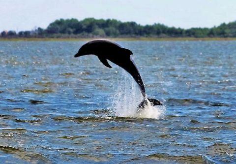 OBX Marina, Paradise Dolphin Cruises